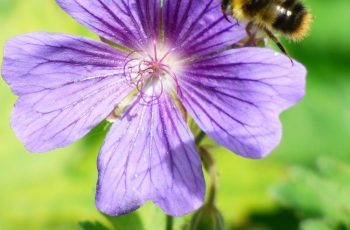 Bee On A Flower By Mark Hogan