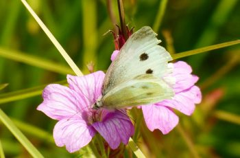 Meadow White By Mark Hogan