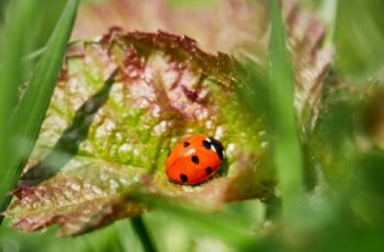 A Ladybird Waming Up By Helen Pocock