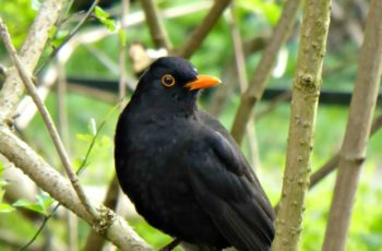 Blackbird On The Watch By Rita Egan