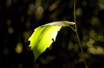 Light On A Leaf By Helen Pocock