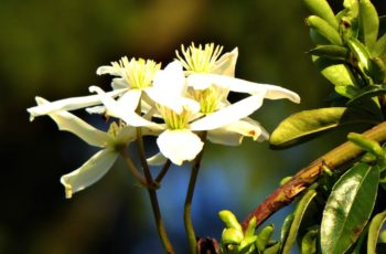 White Flower On The Edge Of The Park By Rita Egan